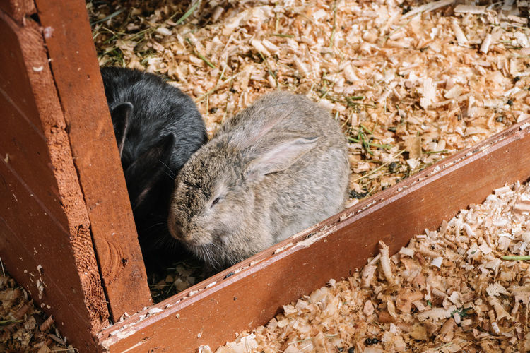 Animal Themes Black Color Close-up Day Dirty Elevated View Ground Mammal Nature No People Outdoors Rabbit