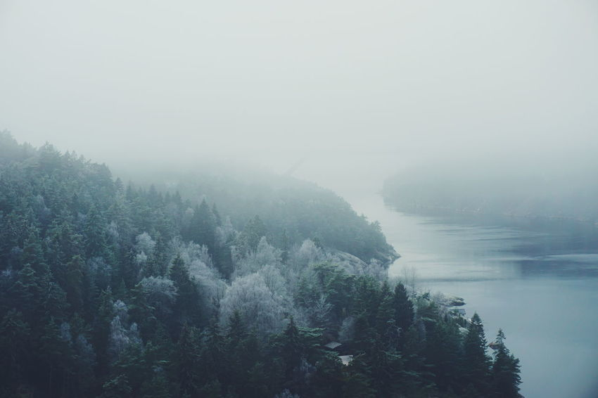 Svinesund and the Ringdals Fjord, Sweden Nature Fog Tree Water Day Scenics Beauty In Nature Outdoors Sky Sweden Svinesund Cold Temperature Scenic Scenery Frost Cold Winter Foggy Mountain Trees Tranquility Svinesund Bru Landscape Landscape_Collection Nature Perspectives On Nature