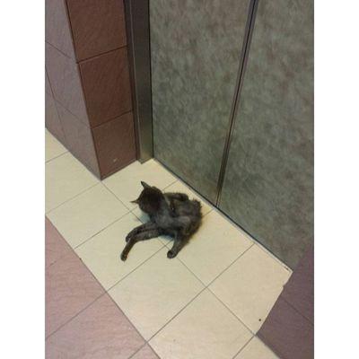 Hello, cat. Cats Meow Lift