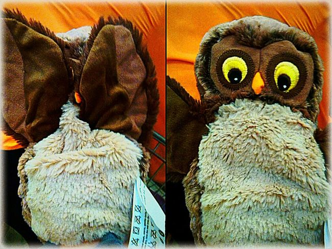Little owl Shopping Petlover Animals IKEA Petstagram Quality Time