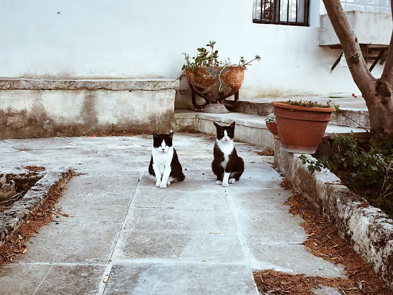 Cats sitting on footpath against building