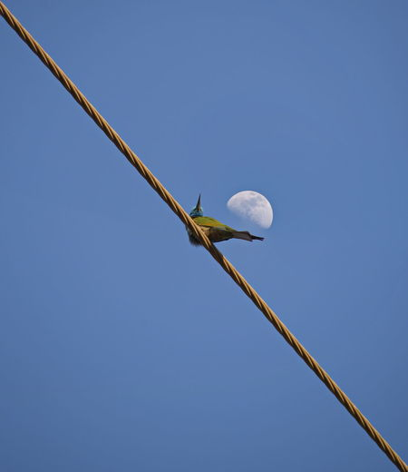 bee eater LINE