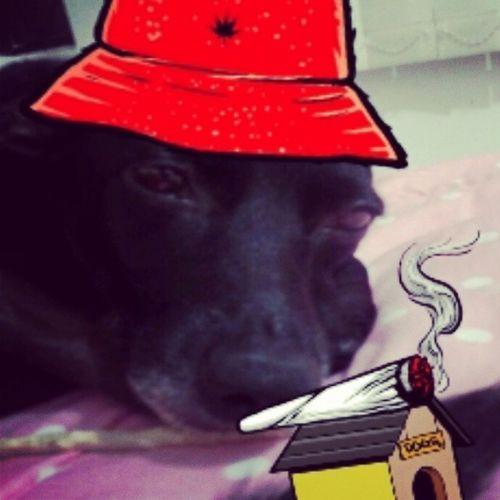 Snoppdogdog Pretinha Amornaomeleveamal kkkkkkk