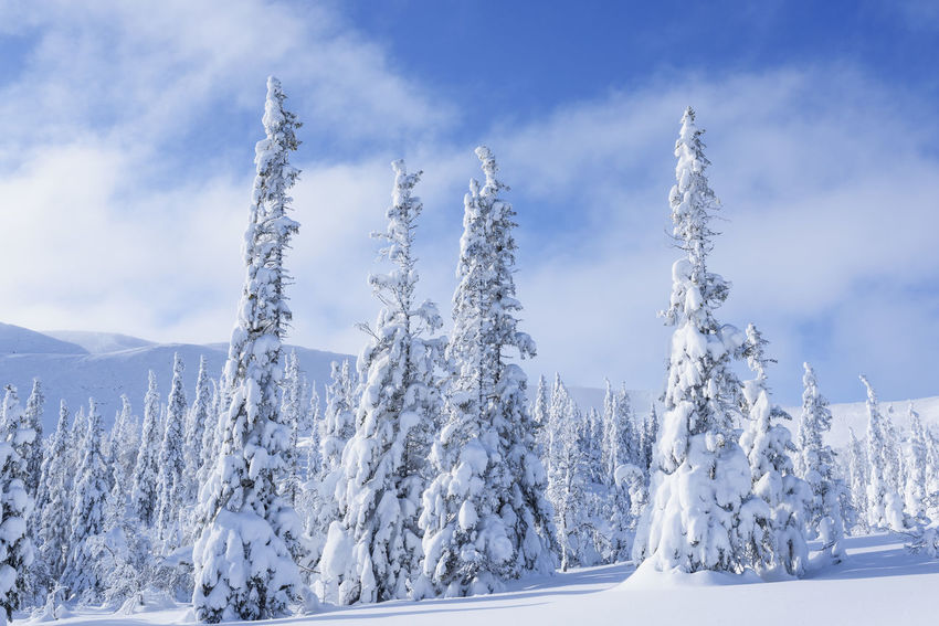Snow Snow ❄ Snow Deep Snow Nikon Trees Trees And Sky Trees And Nature Winter Wintertime Winter Wonderland Forest Forest Photography Winter Wintertime Trees Trees And Sky Planet Earth Sweden Landscape Naturephotograpy Landscapephotography Powder Snow Frost