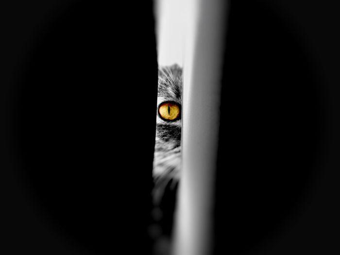 Portrait of cat seen through door
