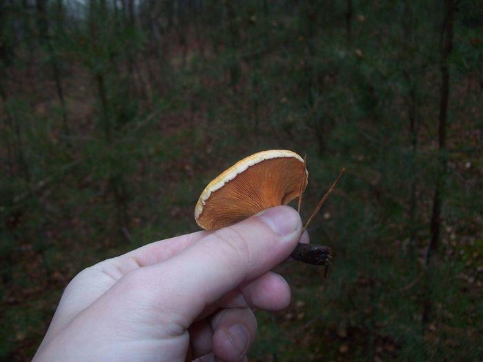 Close-up of hand holding mushroom