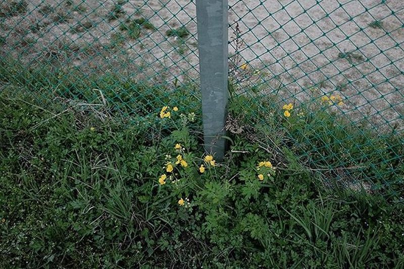 . . 꽃 은 다 예쁘다 아이들 도 다 그렇다 . . . . 오늘은 어린이날 Photography Color Fujifilm 35mm X100t Ontheroad Ordinary  Flowers