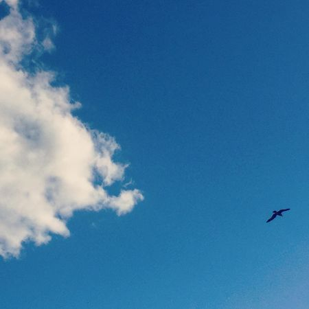 Seagull Lookingup Clouds And Sky Cloud Blue Sky Bournemouth Sunny Day Silhouette Flying Fliying Birds No Filter