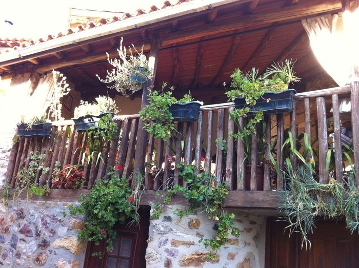 Wooden Veranda supported by stone pillars with green trailing plants Portugal village Plants Trailing Plants Architecture Building Exterior Flower Hanging House Plant Potted Plant Stone Pillars Wood - Material Wooden Veranda