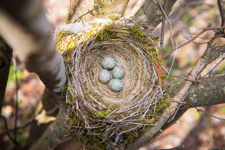 High angle view of nest on tree