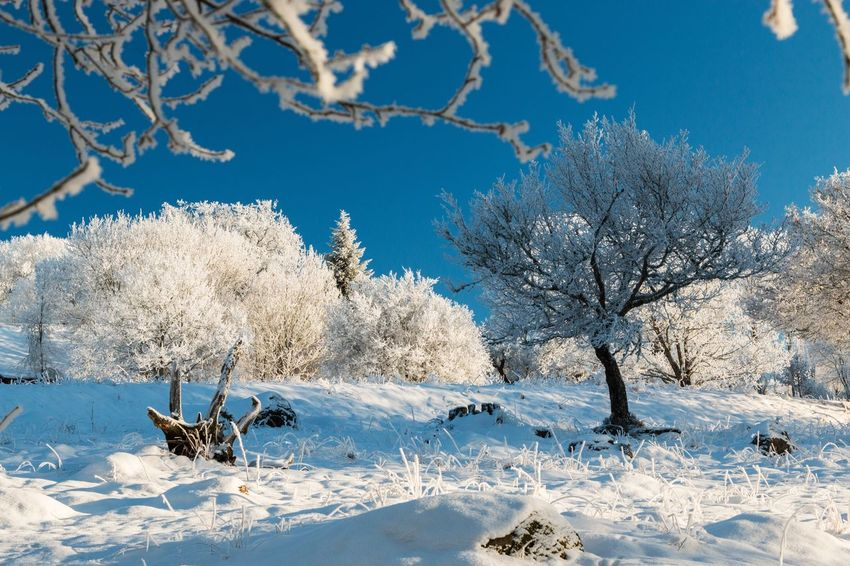Winter landscape - Cold Temperature Snow Winter Nature Tree Weather Branch Tranquility Tranquil Scene Scenics Field Sky Landscape First Eyeem Photo Exceptional Photographs The Week Of Eyeem EyeEm Masterclass Hello World Blue Sky Beauty In Nature Outdoors Bare Tree Idyllic Eye4photography  Frosty