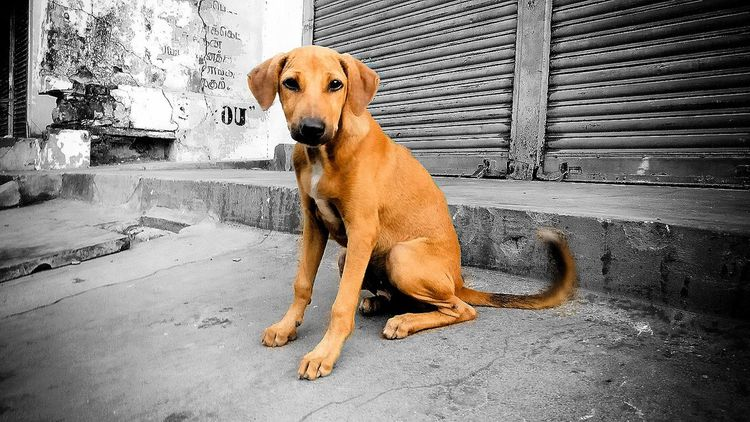EyeEmNewHere Domestic Animals Pets One Animal Animal Themes Outdoors EyeEm Diversity Art Is Everywhere Urbanphotography Streetphotography No People EyeEm Animal Lover Live For The Story Place Of Heart