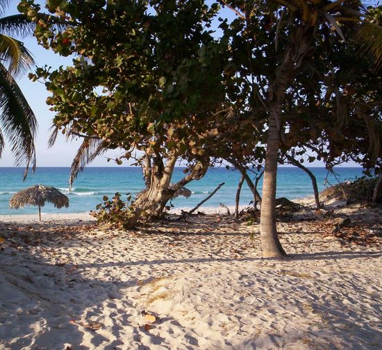 Beach Sea Tree Sand Water Nature Vacations Beauty In Nature Tranquil Scene Shore Sunlight Tranquility Horizon Over Water Scenics Outdoors Shadow Tourism Palm Tree Idyllic Varadero Tropical BreezeVaradero Beach - Cuba Varadero, Cuba Beach Trees Caribbean