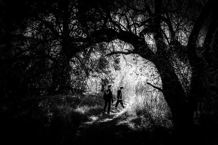 Sendero Branch Day Footpath Full Length Growth Nature Outdoors Outline Park - Man Made Space Person Plant Remote Silhouette Solitude The Way Forward Tranquil Scene Tranquility Tree Walking