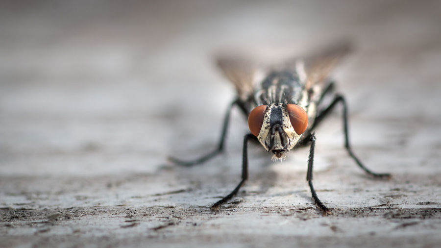 Close-up of housefly on wood