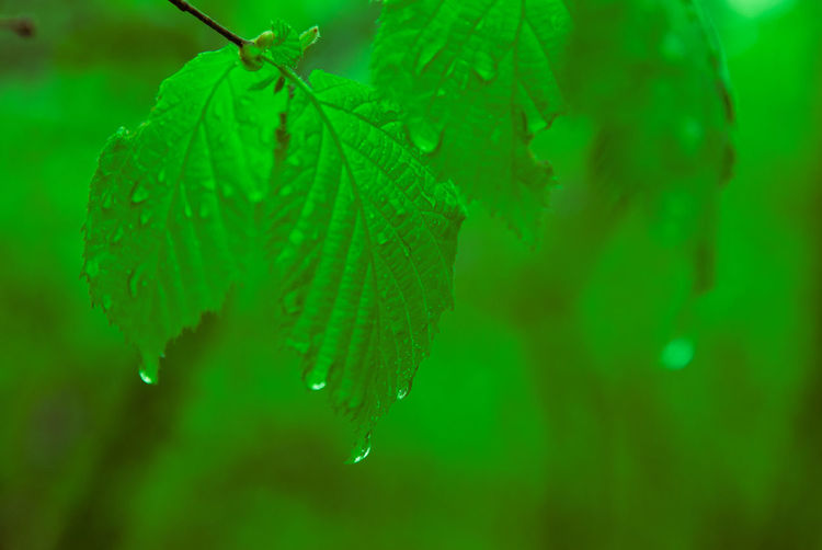 Autumn Beauty In Nature Close-up Day Drop Drops On Leafs End Of Branch Freshness Green Color Leaf Nature No People Outdoors Plant Water