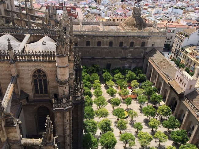 Praying Catedral Sevilla Giralda Monument Church Orangerie Gothic Gothique Andalucía España Architecture