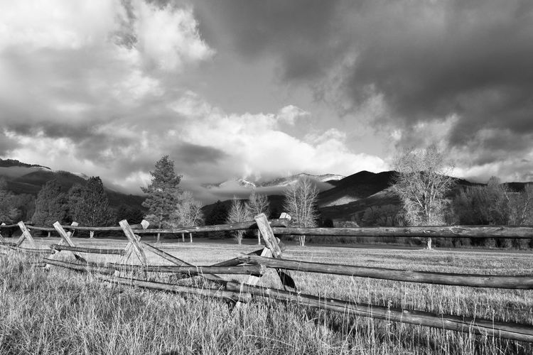 Split Rail Fence Sky Cloud - Sky Barrier Boundary Fence Plant Environment Field Landscape Land Nature Day Tree No People Non-urban Scene Tranquil Scene Tranquility Grass Beauty In Nature Rural Scene Outdoors B&w Scene