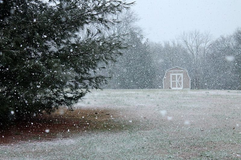 Snow in Murfreesboro Tennessee ❄️ First Eyeem Photo