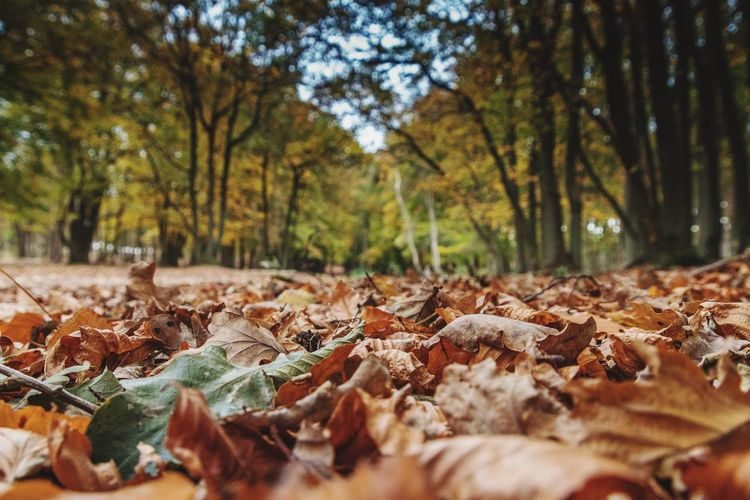 Autumn Leaf Change Nature Tree Dry Beauty In Nature Leaves Forest No People Fallen Day Outdoors Tranquility Scenics Close-up Maple