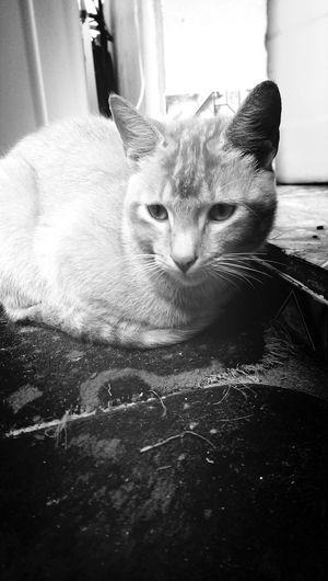 PacificCat Cat Lovers First Eyeem Photo