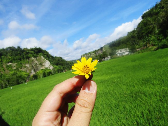 Flower Human Hand Human Body Part Nature Yellow Beauty In Nature Outdoors Flower Head One Person Real People Freshness Close-up Sky Landscape Fragility Day People Gerbera Daisy Adult