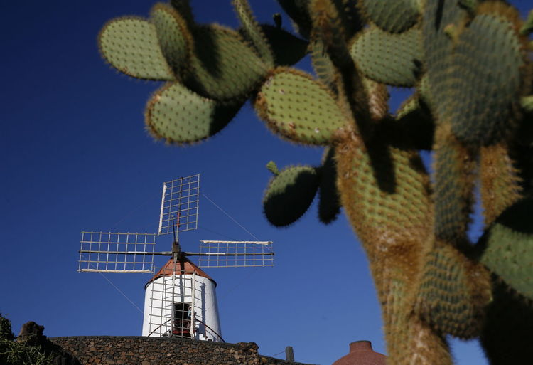 Close-Up Of Cactuses Against Traditional Windmill