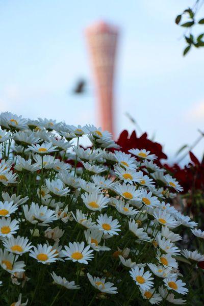 Flowers Port Tower Ocean View at Mosaic