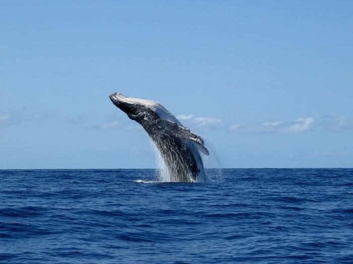 Whale in sea against sky