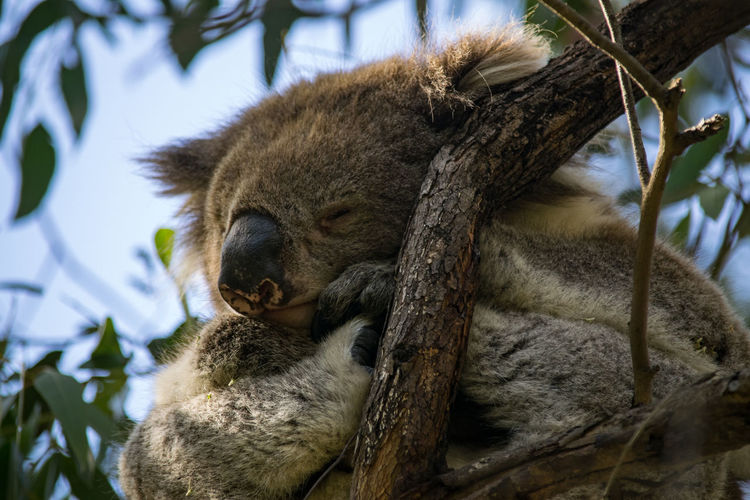 Close-up of lion sleeping on tree