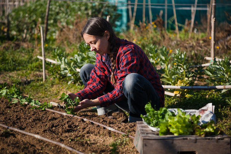 Woman working with vegetables in farm