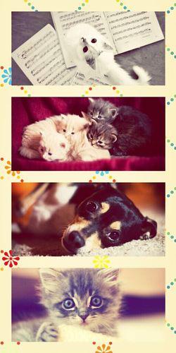 Cats Dog ♥