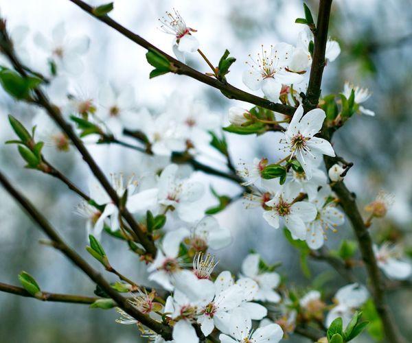 Es Blüht Frühling Spring