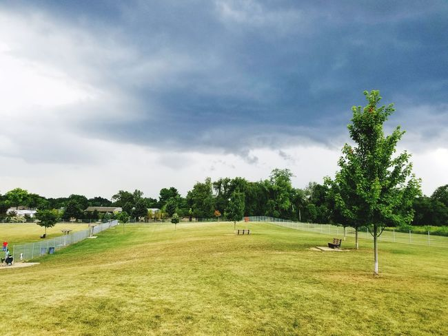 Tree cloud green yard fence Tree Cloud - Sky Nature Grass Sky Beauty In Nature Tranquility Day Playing Field Outdoors No People