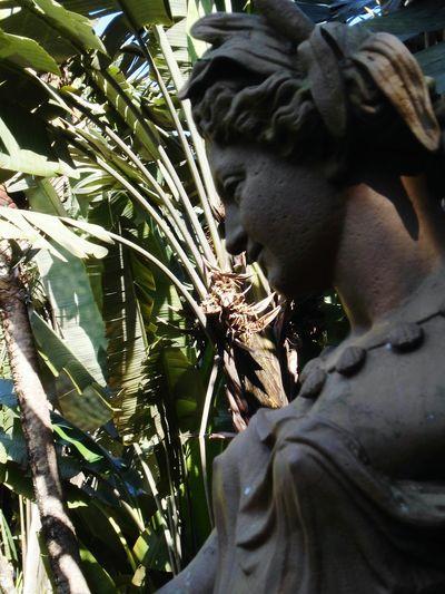 Sculpture Garden No People Plant Jardimbotanicorj