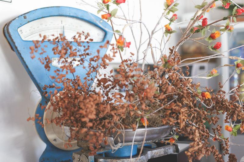 cute local cafe & shop Cafe Coffee Shop Day Decor Decoration Local Market Plant Shop The Shop Around The Corner