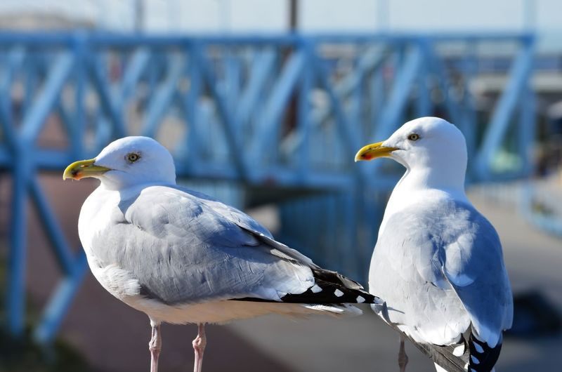 Close-up of seagulls perching on railing