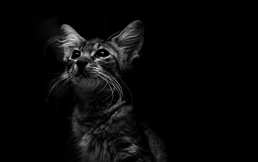 Shades Of Greyhadow] shades Of Grey Check This Out Cat EyeEm Best Shots B&W Portrait EyeEm Nature Lover Love Lovely Beautiful
