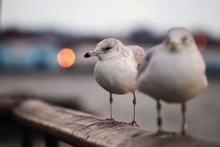 Bokeh Blur Travel Travel Destinations Finesteye New York City New York Bird Animal Themes Animal Vertebrate Animals In The Wild Animal Wildlife Nature Seagull Two Animals Sea Day Group Of Animals No People Selective Focus