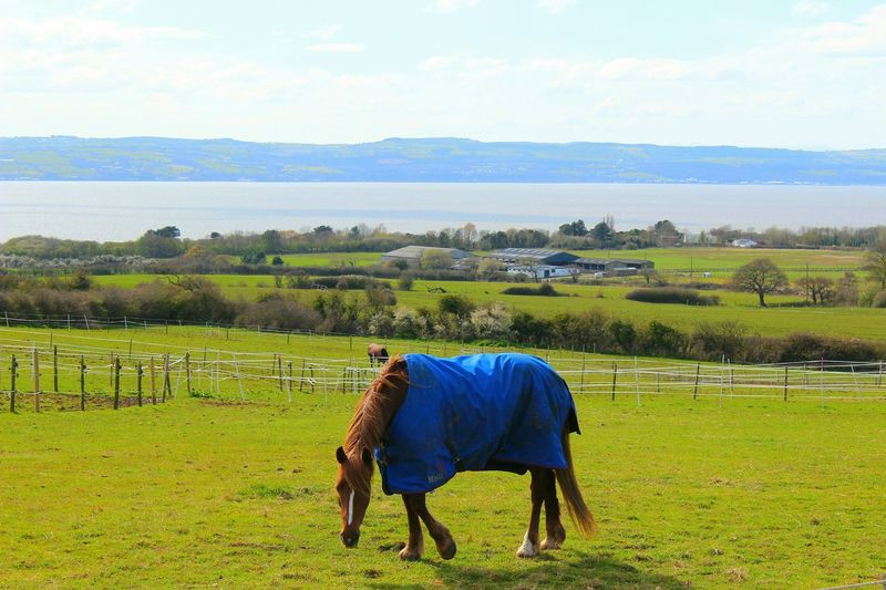 Taking Photos Canon EOS 600D DSLR Hello World Horses Looking To The Other Side Wales UK Enjoying Life