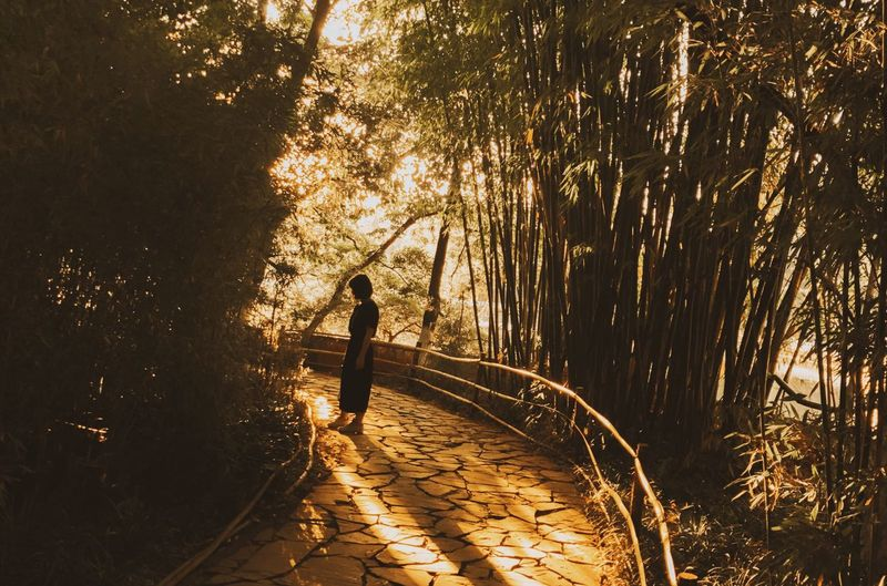 Woman Standing On Footpath Amidst Bamboos