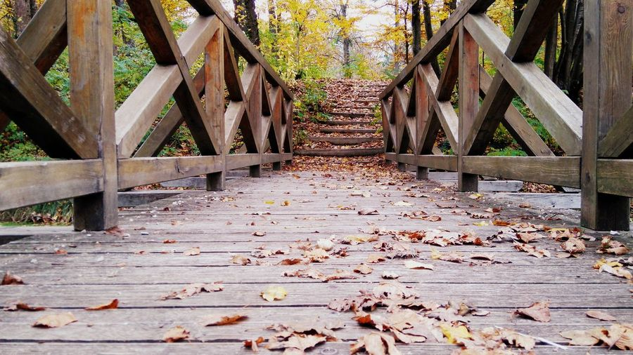 Autumn Autumn Colors Bridge Castle Castle Park City Day Factory Forest Körmend Lake Nature Old Tree Outdoors River Stone Wall Walk Wall