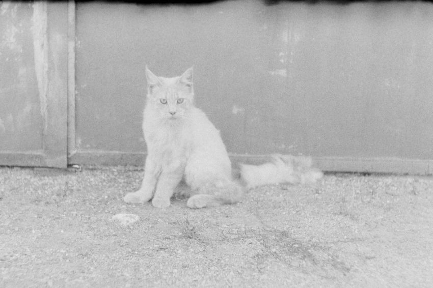 Glum russian cats p. 1 35mm Film CHM Universal 100 Black And White Cat Film Photography Helios 44-2 58mm F2