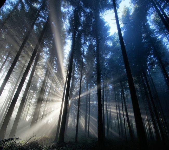 Sunrise Forest Summer Nature