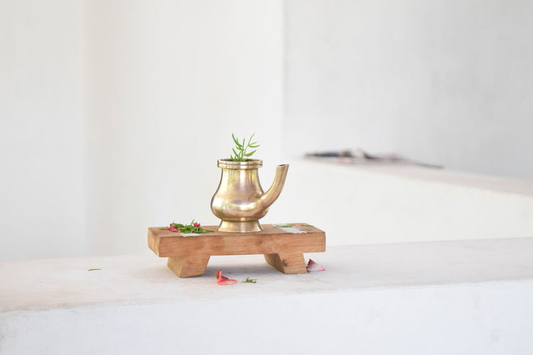 Plant in metallic jar over white background
