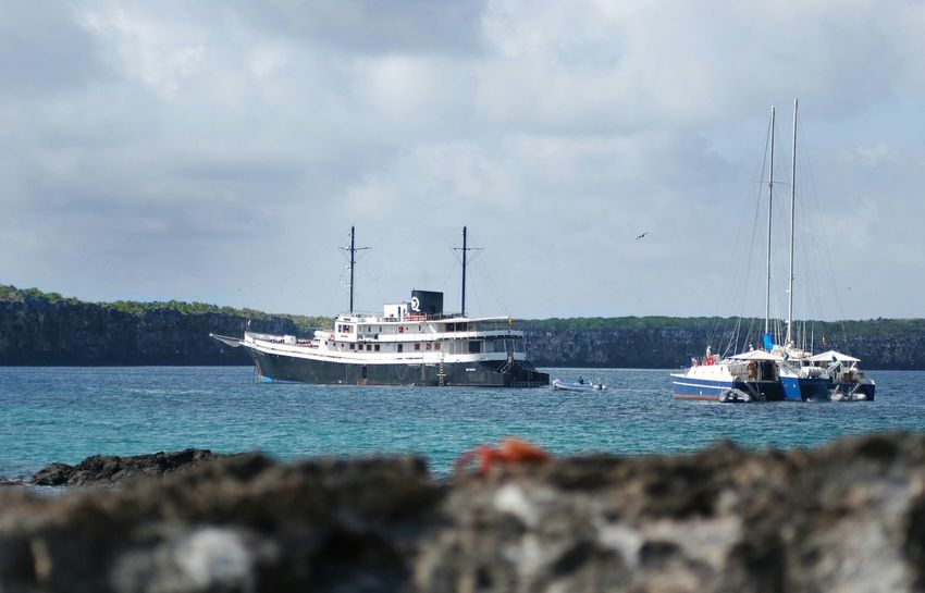 Galapagos Islands Crab Ecuador Depth Of Field Water Ship Cruise Boat