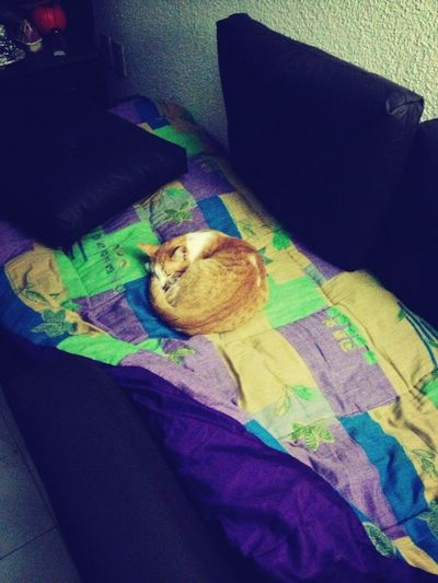 Cat Sleepy Aaawww