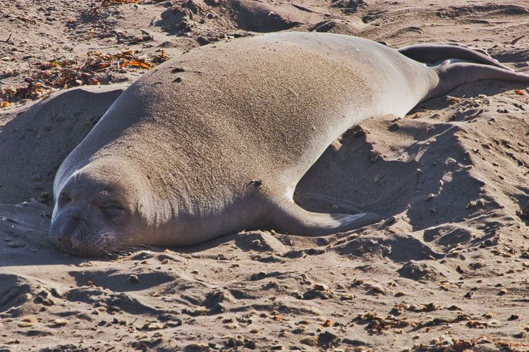 High angle view of animal resting on beach