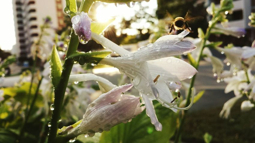 Lily Flower White Flower Nature_collection Wet Mist Sunsetfeverneverends Streamzoofamily Macro Silhouette Into The Night