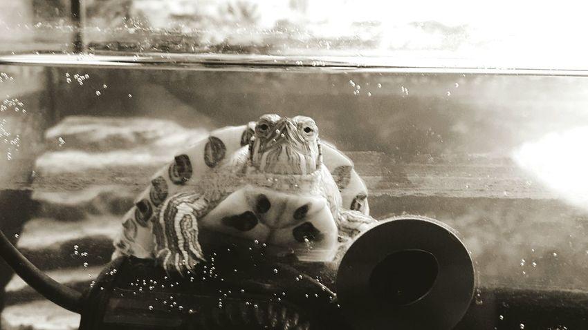 черепаха Turtle 🐢 Animal моя прелесть